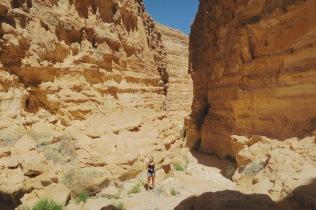 little me, big desert