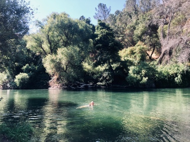 post-Berryessa Putah Creek dips became a habit